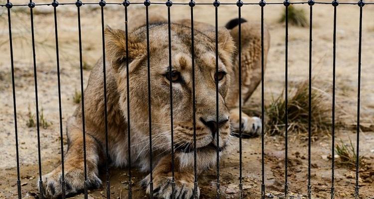 Roubam animais de zoo na Venezuela por falta de comida