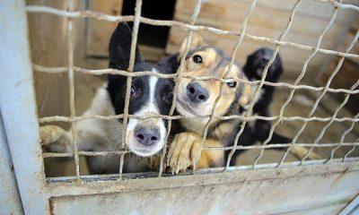 4a4af87b24d HÁ MAIS INQUÉRITOS-CRIME POR ABANDONO E MAUS TRATOS A ANIMAIS